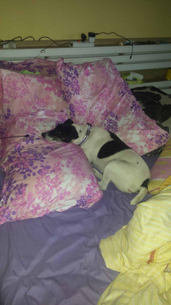 Mein Bett speziell eingerichtet für mich zum liegen....